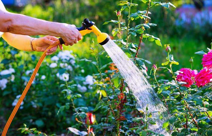 Einfache Gartenbewässerung – warum ein Schlauchaufroller das Leben leichter macht