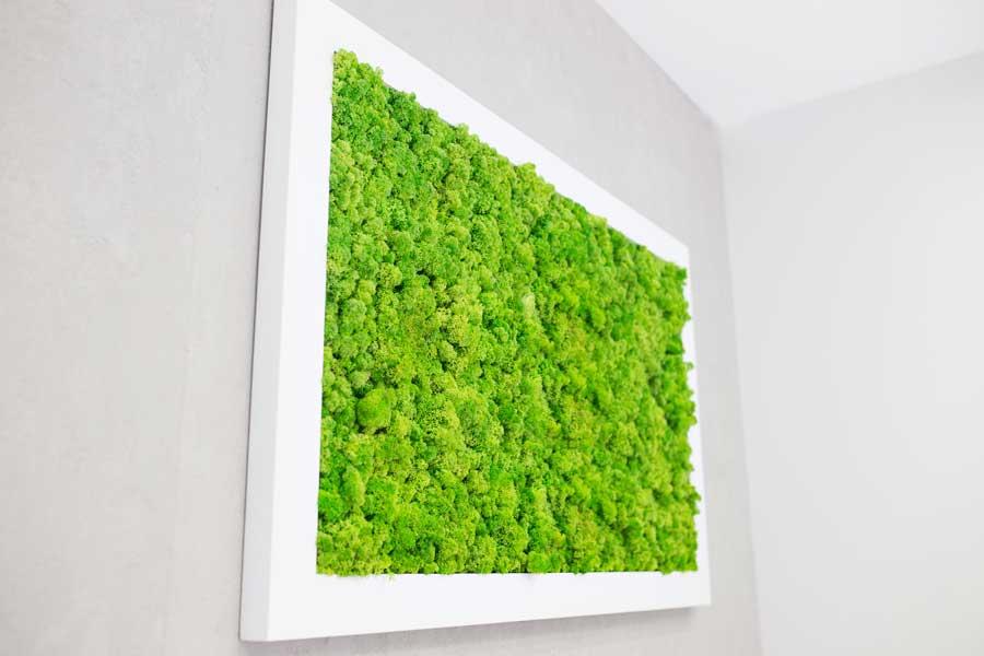 Moosbilder – ein besonderer Wandschmuck für Naturliebhaber