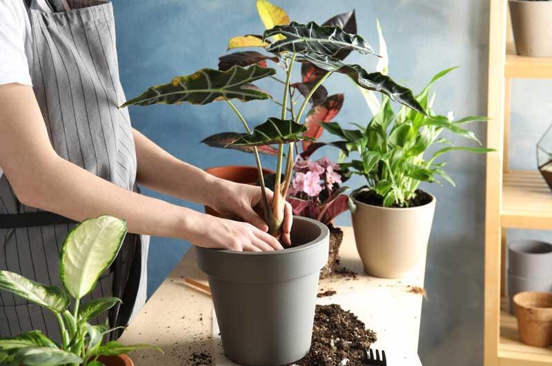 Pflanzen wohnen