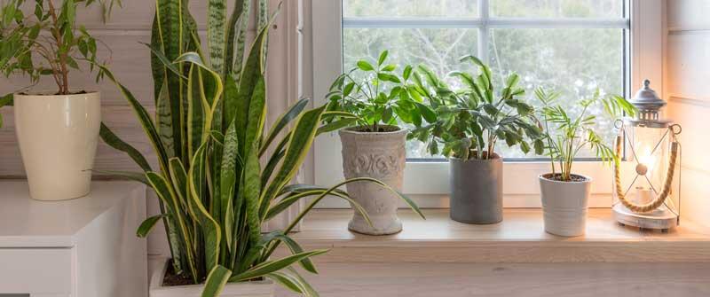 Pflanzen als Dekoration: Tipps & Tricks
