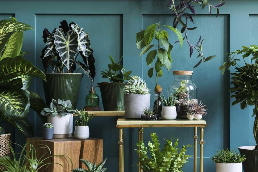Pflanztisch – Möglichkeiten und Varianten